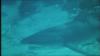 1655_Shark_-_Stunde_der_Entscheidung08.png