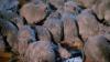 6582_riffs-iii-die-ratten-von-manhattan8.png