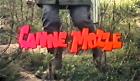 Canne mozze