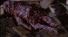 9554_Ein-Zombie-hing-am-Glockenseil-screenshot03.png