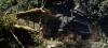 9615_Vampire-gegen-Herakles-screenshot01.png